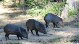 Dono de sítio alimenta animais que apareceram no local durante fuga das queimadas no Pantanal