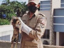 Bombeiros militares resgatam gato preso em residência abandonada