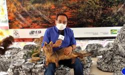 Artista transforma animais atropelados em obras de arte para conscientizar humanidade VEJA VÍDEO