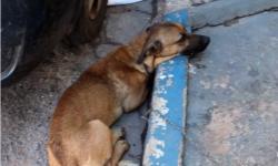 VEJA VÍDEO: Cães mais velhos são abandonados e precisam de um lar em Barra do Garças