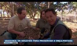 VEJA VÍDEO: A série rio Araguaia da Tv Band mostra luta para salvar onça-pintada