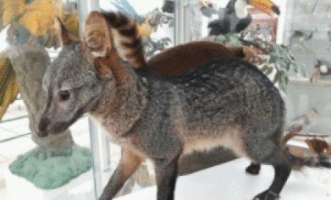UFMT, Câmpus do Araguaia, inaugura Museu de História Natural