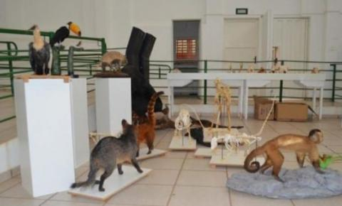 Museu da UFMT de Barra do Garças recebe especialistas e oferece oficina à comunidade