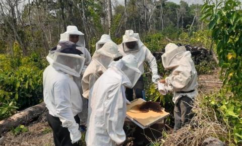Empaer realiza curso de apicultura com foco na comercialização de mel silvestre