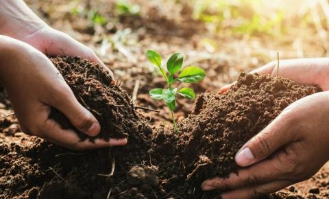 Projeto vai plantar mais de 11 mil árvores em homenagem às vítimas da Covid-19 em MT